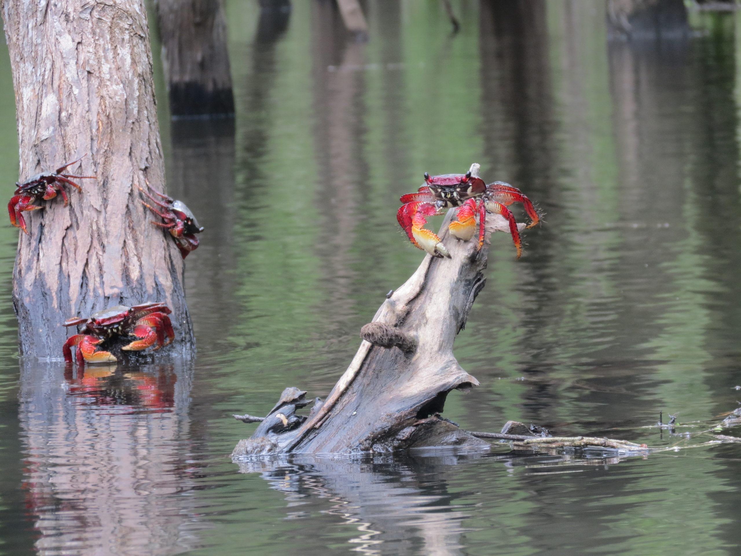 Manguezais de Paraty - Mangrove áreas
