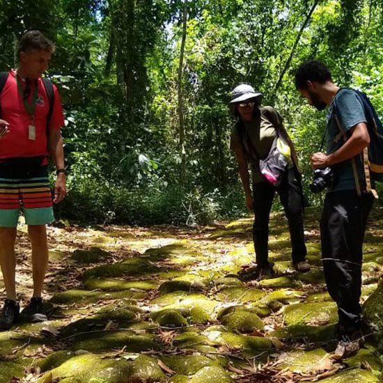 Passeio Pancs na Floresta - Trilhas em Paraty