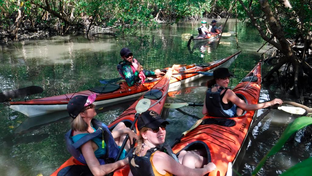 conhecendo a área de manguezal de Paraty